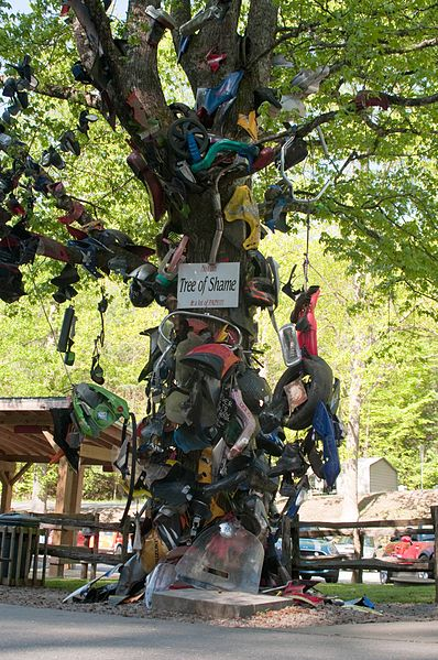Deals-Gap-Tree-of-Shame